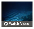 Video Great Barrier Reef