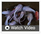 video of deepest fish