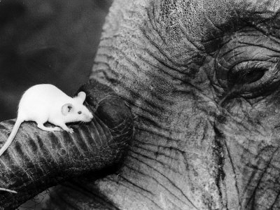 Mouse on elephant